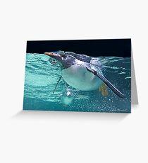 Penguin, Melbourne Auquarium Greeting Card