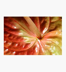 Anthurium Photographic Print