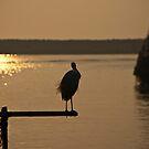 Lone Crane by paulmcardle