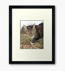 Lucy Lawns Framed Print
