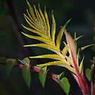 Sumac Light by Lynn Wiles