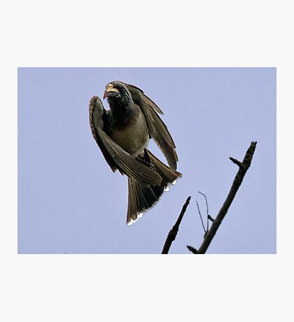 Ugly Birds Can Fly And Look Good ! Photographic Print