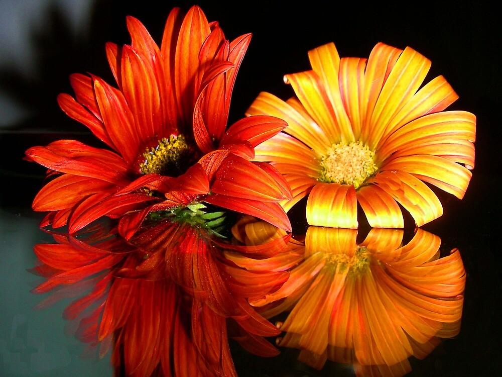 Reflejo.... by cieloverde