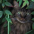 Hiding in the Bushes by Heather Friedman