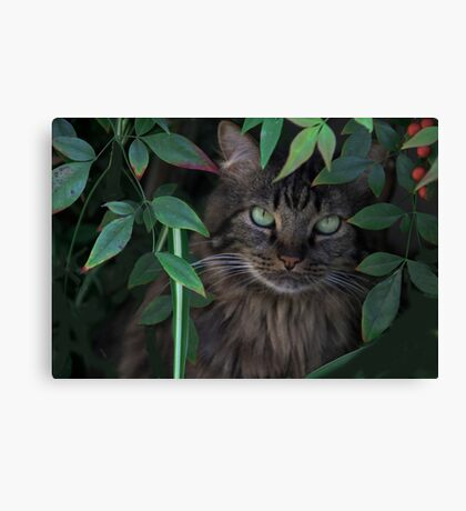 Hiding in the Bushes Canvas Print