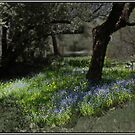 Spring Life Under the Apple by Wayne King
