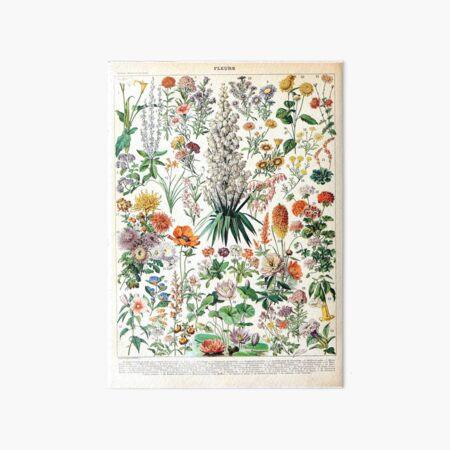 Adolphe Millot - Fleurs B - French vintage poster Art Board Print
