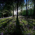 Idless Bluebells by Simon Marsden