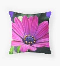 Pink and Purple - Cape Daisy and Petunias Throw Pillow