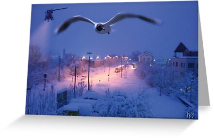 seagull at winter by NafetsNuarb