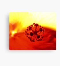 Hibiscus Fire! Canvas Print