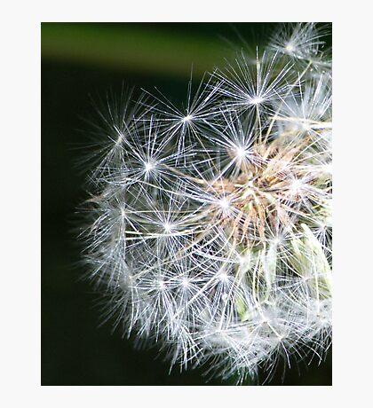 Metaphysics of Now Photographic Print