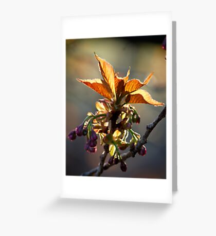 Leaf Protector at Sunset Greeting Card