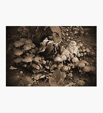 Alice's Wonderland Dream Photographic Print