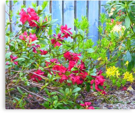 A Windswept Corner Of The Garden by Fara