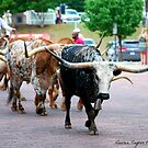 Cattle Drive by Taylor Russell