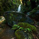 Kaiate baby ferns by Ken Wright