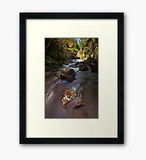 Kaiate copper ferns Framed Print