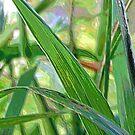Green Grass by aprilann