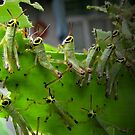 A swarm of leaves-eaters... by mariatheresa