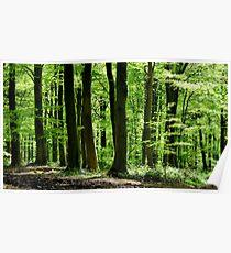 Beech Woods 1 Poster