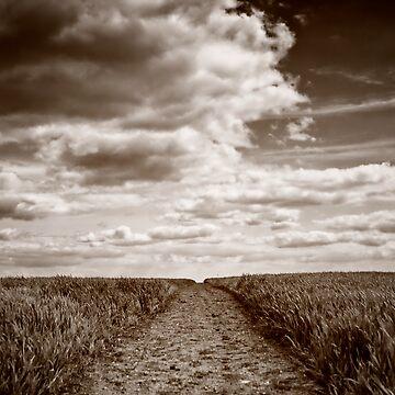 Field Walks by InspiraImage