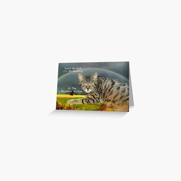 Sympathy for loss of pet cat Greeting Card