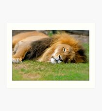 All tuckered out! Art Print