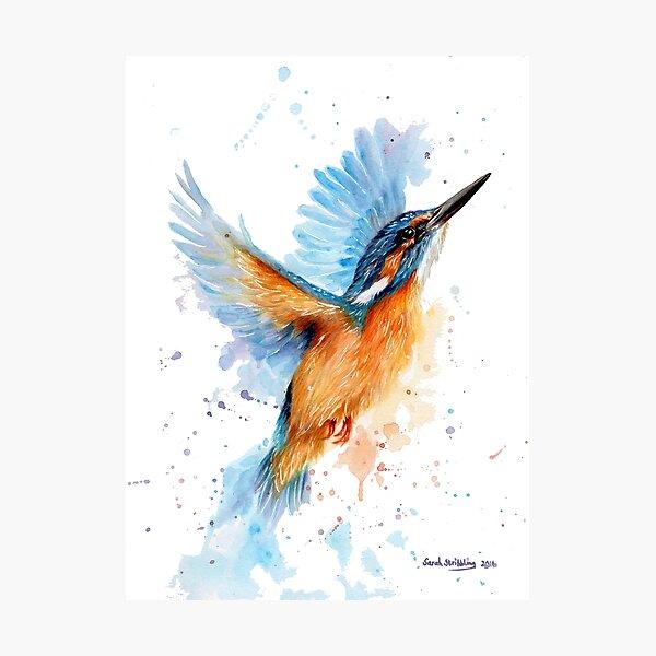 Kingfisher watercolour Photographic Print