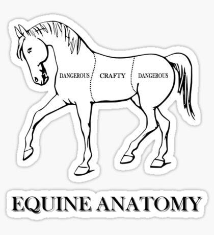 Equine Anatomy Sticker