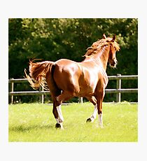 Golden Boy Photographic Print