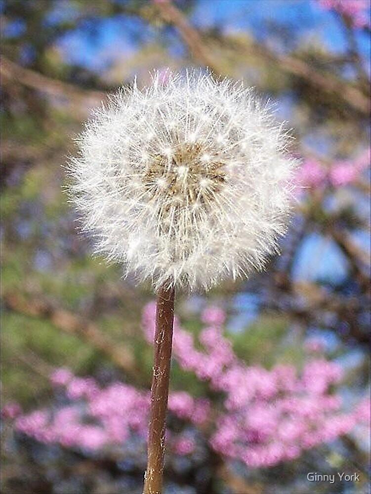 Make A Wish by Ginny York