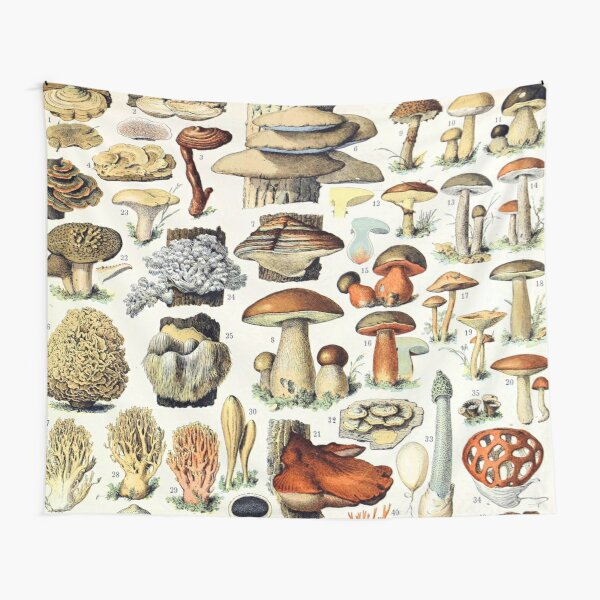 Adolphe Millot - Champignons A - French vintage poster Tapestry