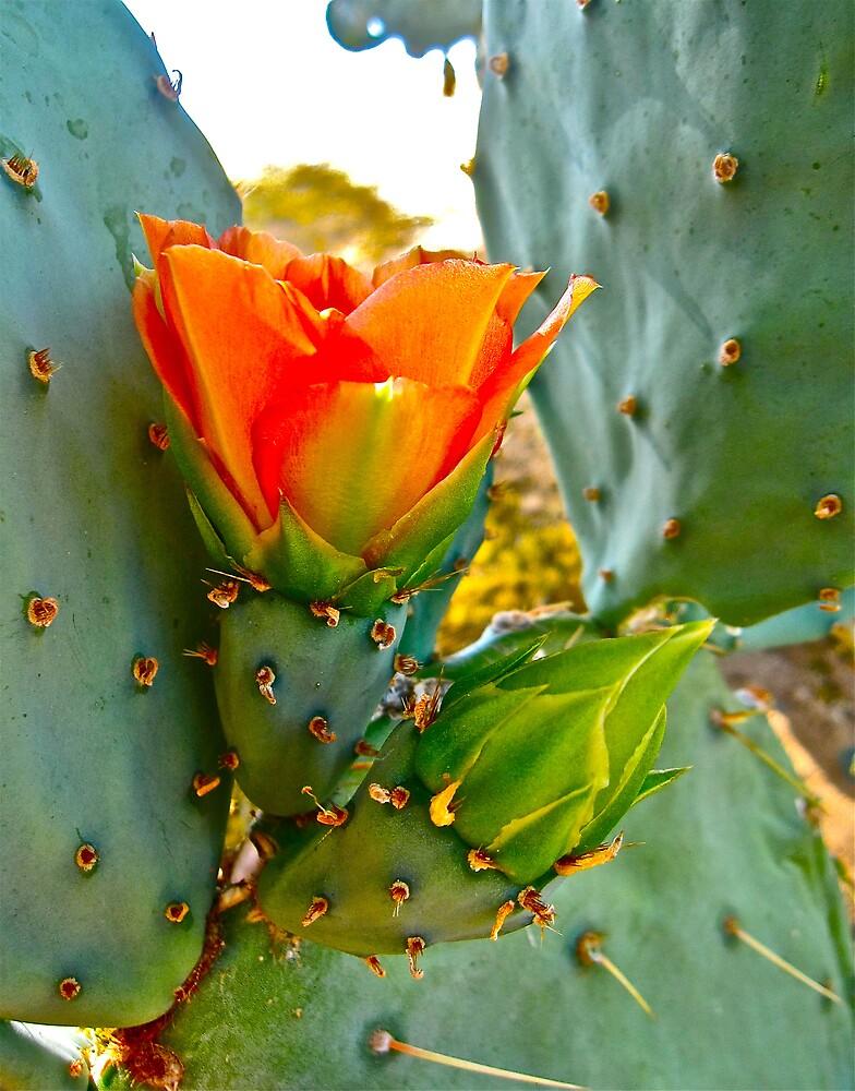 """Desert Spring"" by AlexandraZloto"