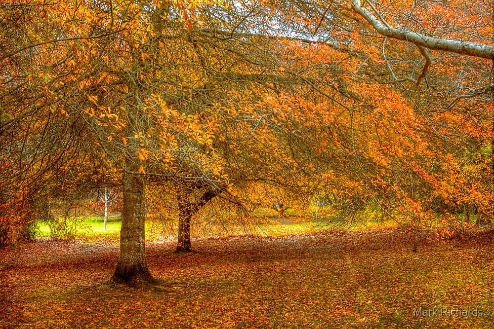 Image result for autumn adelaide hills