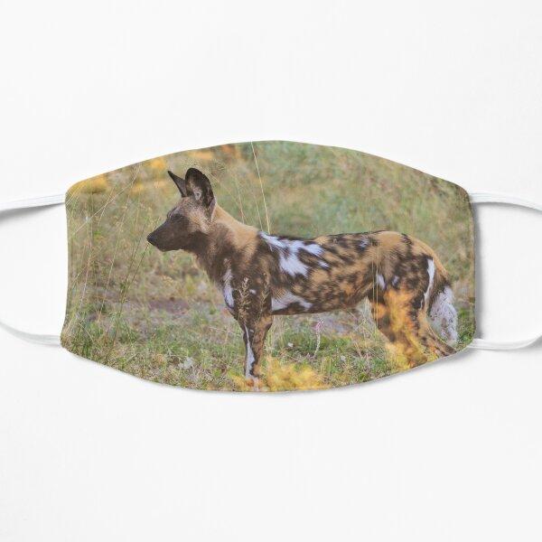 Afrikanischer Wildhund im Okavango Flache Maske