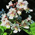 Catalpa Tree Blossom Boquet by Ron Russell
