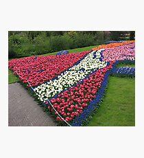 Flamboyant Flowerbed - Keukenhof Gardens Photographic Print