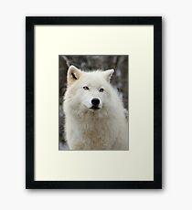 Arctic Wolf Close Up Framed Print