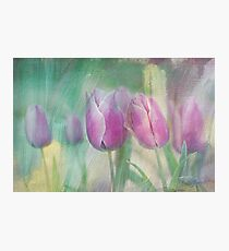 simply tulips Photographic Print