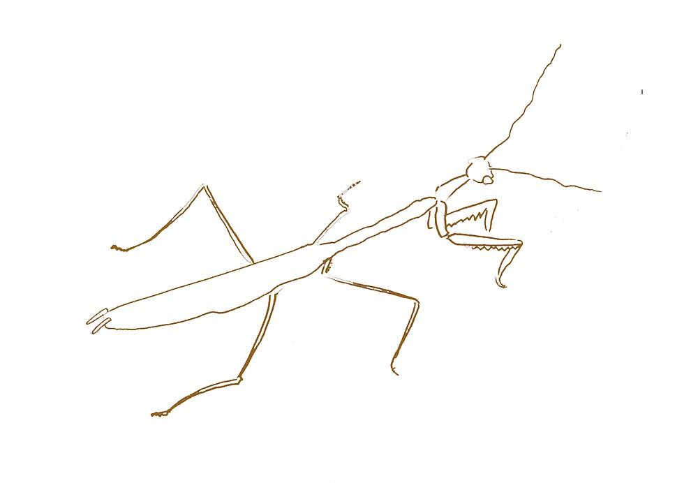 Praying Mantis 1996 by Robert Phillips