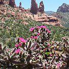 Blooming Sedona, Arizona by Joni  Rae