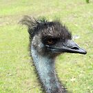 Emu (disambiguation) by Kristy Dalpez