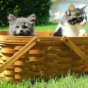Mischievous Kittens in a Basket by anitahiltz