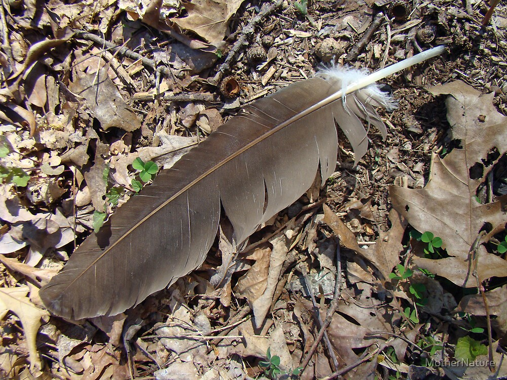 Turkey Vulture Feather - Cathartes aura by MotherNature