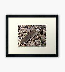 Turkey Vulture Feather - Cathartes aura Framed Print