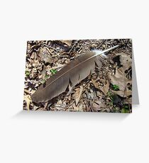 Turkey Vulture Feather - Cathartes aura Greeting Card