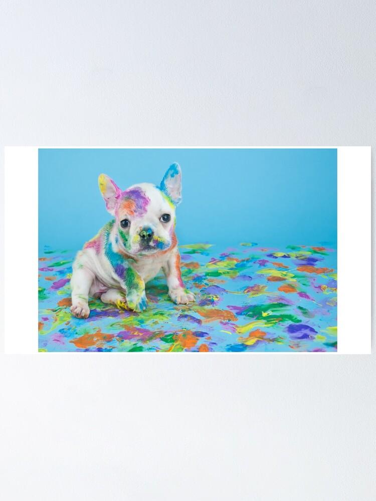 French Bulldog Puppy Cute Skoda Small White Baby Poster By Yanulik Redbubble