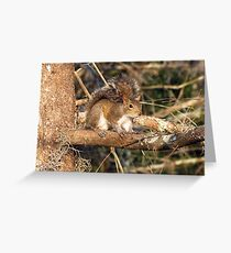 Just a Squirrel Greeting Card