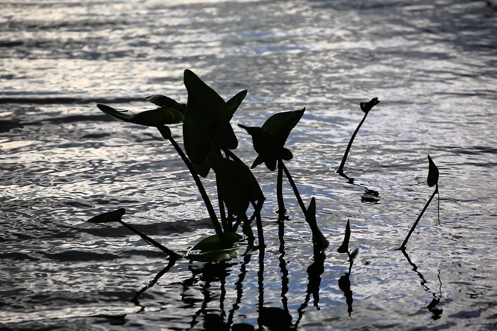 Pond Silhouette by Frank Romeo